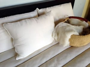 Organic Cotton Covered Wool Pillows